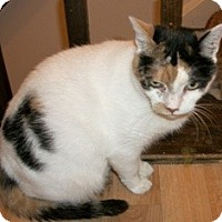 Adopt A Pet :: PUMPKIN - Philadelphia, PA