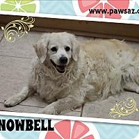 Adopt A Pet :: SNOWBELL - Higley, AZ