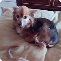 Adopt A Pet :: KYLE (LM) - Tampa, FL