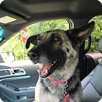 Adopt A Pet :: Naomi - Memphis, TN