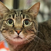 Adopt A Pet :: JoJo - Great Falls, MT