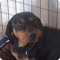 Adopt A Pet :: CASH - West Hartford, CT