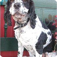 Adopt A Pet :: Maggie - Sugarland, TX