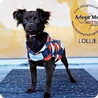 Adopt A Pet :: Lollie - Shawnee Mission, KS