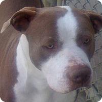 Adopt A Pet :: Bronson - Sacramento, CA