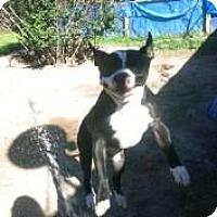 Adopt A Pet :: Cruizer - Cleveland, TX