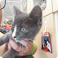 Adopt A Pet :: Aria - Stafford, VA