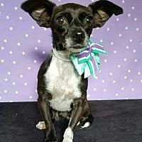 Adopt A Pet :: Larsen - Pluckemin, NJ