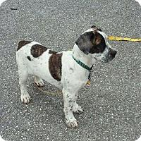 Adopt A Pet :: Sanford - Aurora, CO