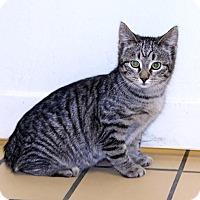 Adopt A Pet :: Babs - Lumberton, NC