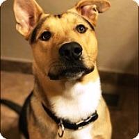 Adopt A Pet :: Kingsley - Vancouver, WA
