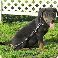 Adopt A Pet :: JOBEE - Bedminster, NJ