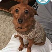Adopt A Pet :: Tink - Kimberton, PA