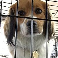 Adopt A Pet :: Tilly - Sugarland, TX