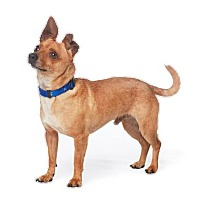 Adopt A Pet :: Jerry Seinfeldd - Los Angeles, CA