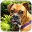 Photo 2 - Boxer Mix Dog for adoption in Albany, Georgia - Emmett