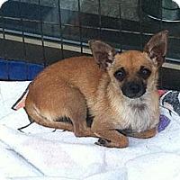Adopt A Pet :: Tina - Garden Grove, CA