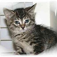 Adopt A Pet :: Megan - Montgomery, IL