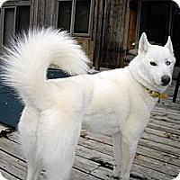 Adopt A Pet :: Roxy - Horsham, PA
