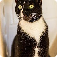 Adopt A Pet :: Micheal - Fairhope, AL