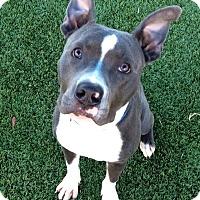 Adopt A Pet :: Hero - Orlando, FL