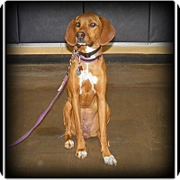 Adopt A Pet :: Aki - Indian Trail, NC