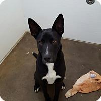Adopt A Pet :: Charlie - Nuevo, CA