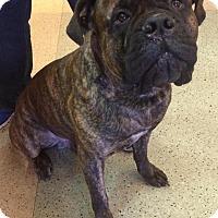 Adopt A Pet :: KOBE - Oswego, IL