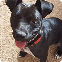 Adopt A Pet :: Shadow - Las Cruces, NM