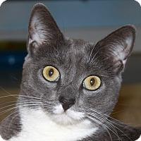 Adopt A Pet :: Allie - North Branford, CT