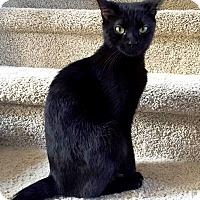 Adopt A Pet :: CeeCee - Nolensville, TN