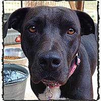Adopt A Pet :: Sweetie - Bastrop, TX