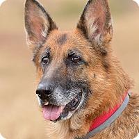 Adopt A Pet :: Lillie - Dacula, GA