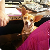 Adopt A Pet :: Peanut - Pueblo, CO