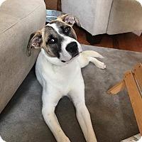 Adopt A Pet :: Jessa - Columbia, TN