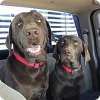 Adopt A Pet :: Maia - Denton, TX