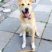Adopt A Pet :: Lou - Blackstock, ON