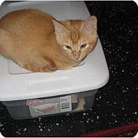 Adopt A Pet :: Tinkerbell - Jeffersonville, IN