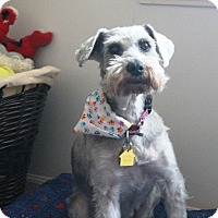 Adopt A Pet :: Gracie - Sharonville, OH