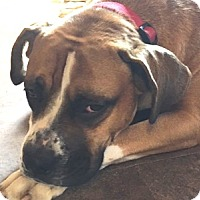 Adopt A Pet :: Chandler  is Adopted! - Turnersville, NJ