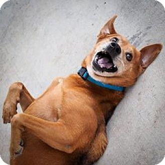 Hound (Unknown Type) Mix Dog for adoption in Baton Rouge, Louisiana - Tango