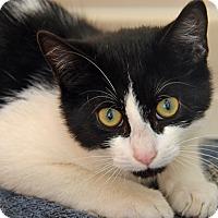 Adopt A Pet :: 10309970 - Brooksville, FL