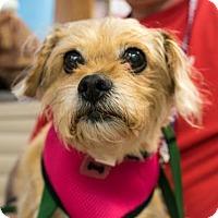 Adopt A Pet :: Frida - San Francisco, CA