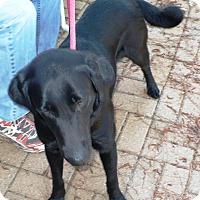 Adopt A Pet :: Pepper - Eastpoint, FL