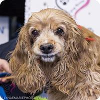 Adopt A Pet :: Bam Bam - Grand Rapids, MI