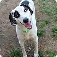 Adopt A Pet :: Banjo - Shreveport, LA