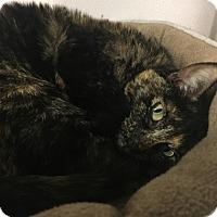Adopt A Pet :: SAGE - Newport, OR