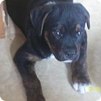 Adopt A Pet :: Buster - Farmingtoon, MO