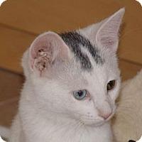 Adopt A Pet :: Glimmer - Scottsdale, AZ