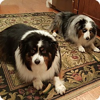Adopt A Pet :: Abby and Lexi - Minneapolis, MN